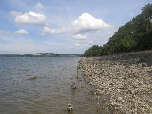 bar à vue à la mouche, bar en estuaire, pêche du bar à la mouche, jean-baptiste vidal, pêche à vue