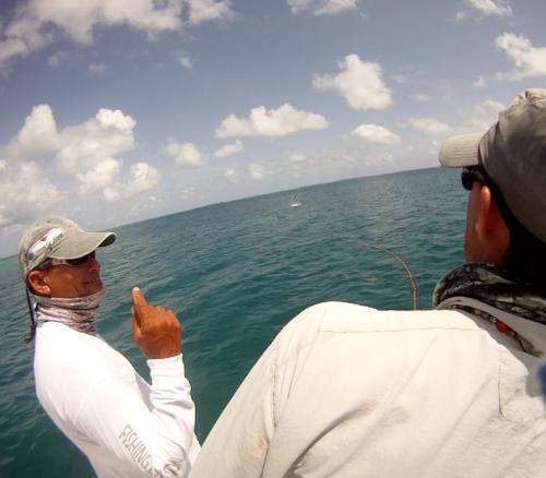 histoire de pêche, tarpon du venezuela, pêche du tarpon à la mouche, gros tarpon à la mouche, pêche à la mouche Los Roques, Jean-Baptiste Vidal Moniteur-Guide de pêche, Enjoy Fishing