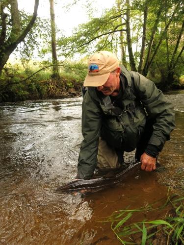 BIlan peche des migrateurs en Bretagne, Report fin de saison saumon, Compte rendu saison saumon Bretagne, Jean-Baptiste Vidal Guide de peche à la mouche en Bretagne, Enjoy FIshing