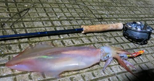 Pêche Mouche, calamar à la mouche, Jean-Baptiste Vidal guide de pêche à la mouche, Enjoy Fishing