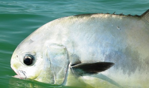 Mexique, Ascencion Bay, Punta Allen, permit, peche a la mouche, fly fishing, Mexico, Permit fishing, Peche Mouche magazine