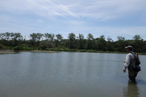 carpes à la mouche, carpes à vue, pêche de la carpe à la mouche, enjoy Fishing, jean-baptiste vidal guide de pêche