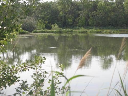 carpe à la mouche, carpe à vue, peche de la carpe à la mouche, enjoy fishing, jean-baptiste vidal guide de pêche,