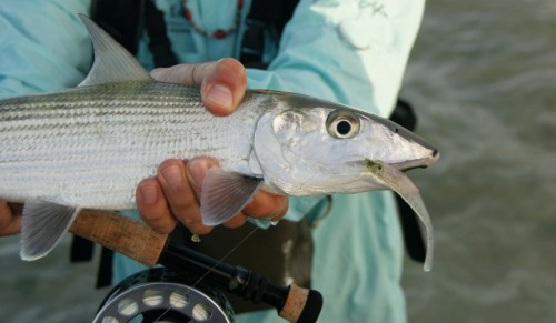 Venezuela, Los Roques, bonefish, tarpon, permit, fly fishing, peche a la mouche, saltwater, enjoy fishing
