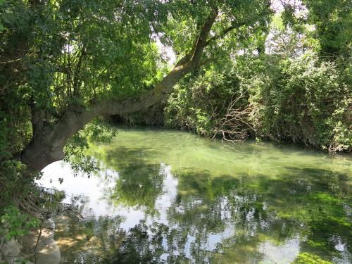 sorgue vauclusienne,pêche de l'ombre,peche en nymphe à vue,enjoy fishing,jean baptiste vidal