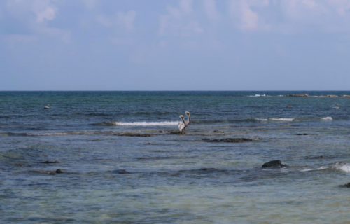 pêche du permit,permit à la mouche,voyage en diy au mexique,pêche du permit au mexique,la fièvre du permit,pêche à la mouche exotique,jean-baptiste vidal moniteur-guide de pêche,enjoy fishing,truites&cie