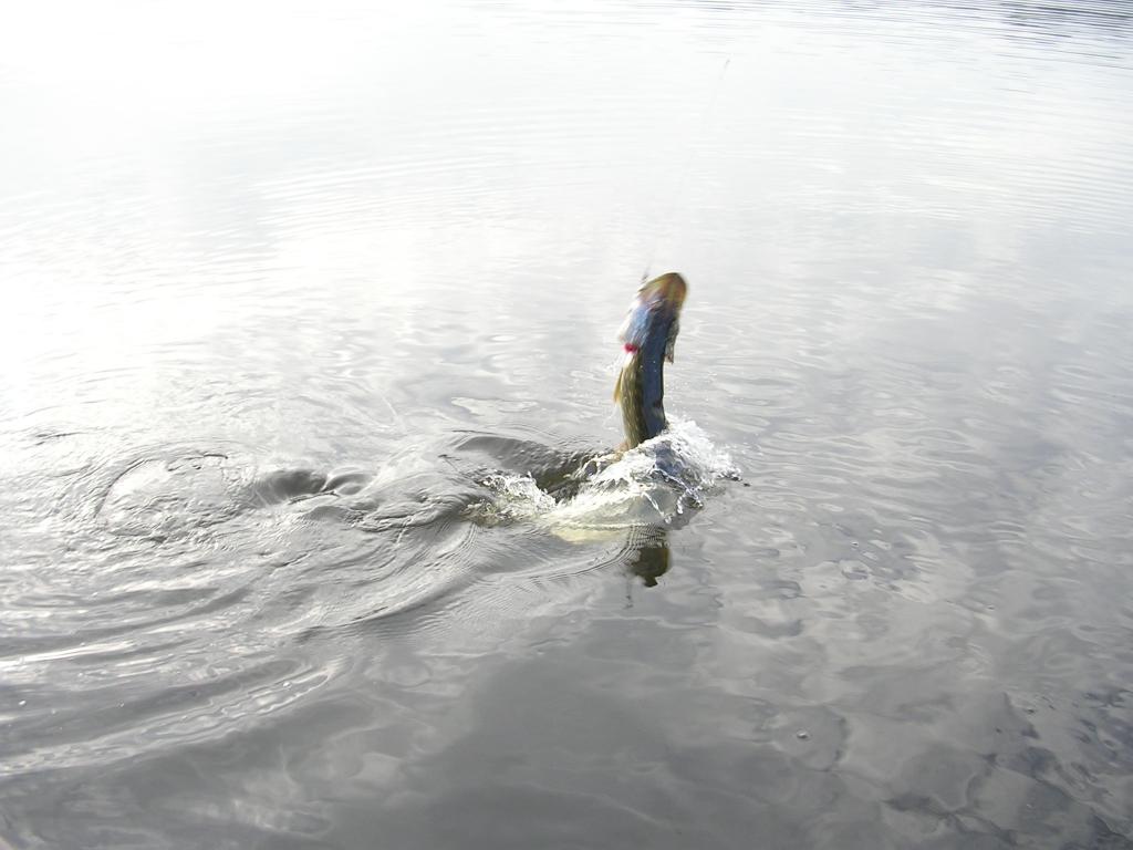 Efremov vidéo la pêche