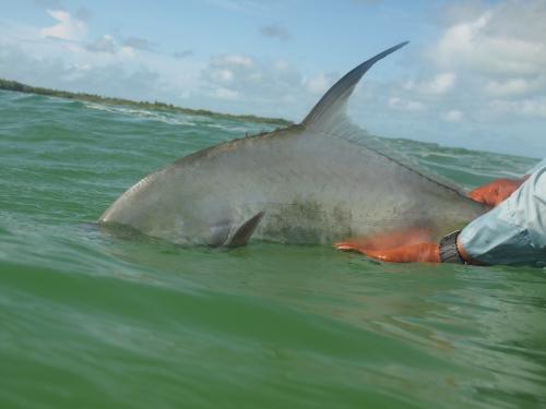 cuba,cayo cruz,avalon,pêche du permit et du tarpon à la mouche,jean-baptiste vidal guide de pêche à la mouche en bretagne